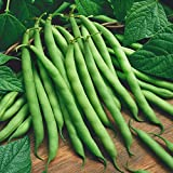 photo: buy Everwilde Farms - 1 Lb Blue Lake Bush Green Bean Seeds - Gold Vault online, best price $6.00 new 2018-2017 bestseller, review