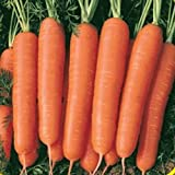 photo: buy Everwilde Farms - 2000 Scarlet Nantes Carrot Seeds - Gold Vault Jumbo Seed Packet online, best price $2.50 new 2018-2017 bestseller, review
