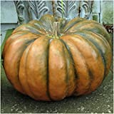 photo: buy Package of 40 Seeds, Fairytale Pumpkin (Cucurbita moschata) Non-GMO Seeds by Seed Needs online, best price $3.65 new 2017-2016 bestseller, review