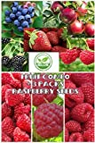 photo: buy Fruit Combo Pack Raspberry, Blackberry, Blueberry, Strawberry, Apple (Organic) 975+ Seeds UPC 600188190564 & 3 Free Packs of Raspberry Seeds online, best price $8.12 new 2018-2017 bestseller, review