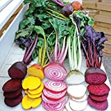 photo: buy Park Seed Rainbow Mix Beet Seeds online, best price $5.95 new 2018-2017 bestseller, review