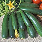 photo: buy Kings Seeds - Courgette Zucchini - 20 Seeds online, best price $1.63 new 2018-2017 bestseller, review