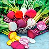 photo: buy Package of 600 Seeds, Rainbow Mixed Beets (Beta vulgaris) Non-GMO Seeds online, best price $3.99 new 2018-2017 bestseller, review