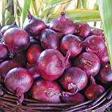 photo: buy Onion - North Holland Blood Red - 250 Seeds online, best price $1.39 new 2017-2016 bestseller, review