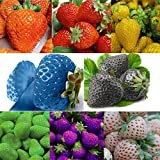 photo: buy 100 pcs Strawberry Climbing Strawberry Fruit Plant Seeds Home Garden Seeds online, best price $10.00 new 2017-2016 bestseller, review