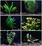 photo: buy 25+ stems / 6 species Live Aquarium Plants Package - Anacharis, Amazon and more! online, best price $19.99 new 2019-2018 bestseller, review