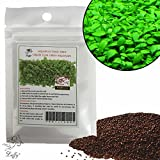 photo: buy Luffy Aquarium Grass Seeds (Glossostigma Elatinoides) - 2oz Pack - Aquarium Carpet Plant - Easy to Plant & Maintain - Creates a Natural Ecosystem for Your Fish - Ideal for Beginners and Pros online, best price $14.95 new 2019-2018 bestseller, review