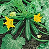 photo: buy Courgette - Early Gem F1 - 15 Seeds online, best price $1.12 new 2018-2017 bestseller, review