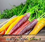photo: buy BIG PACK x Organic Rainbow Mix Carrot (1,000+) Seeds - Atomic Red, Bambino Orange, Cosmic Purple, Lunar White and Solar Yellow - By MySeeds.Co online, best price $10.95 new 2018-2017 bestseller, review