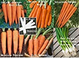 photo: buy Bulk 3 Carrot Seeds Survival Seeds 900 Seeds Upc 646263361016 + 6 Plant Markers Danvers Nantes Sugarsnax online, best price $5.00 new 2018-2017 bestseller, review