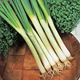 photo: buy Onion (Spring) - White Lisbon (Winter Hardy) - 600 Seeds online, best price $2.26 new 2018-2017 bestseller, review