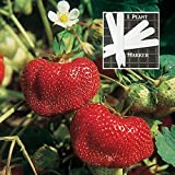 photo: buy Organic Tribute Strawberry 300 Seeds Upc 646263362501 + 1 Free Plant Marker online, best price $6.09 new 2018-2017 bestseller, review