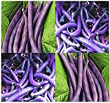 photo: buy 20 ROYAL BURGUNDY Bush Bean seeds great for eating raw cooked freezing PURPLE online, best price $3.30 new 2018-2017 bestseller, review