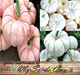 photo: buy BIG PACK - (42-50+) Red-ish (Pink) White & Blue Pumpkin Mix Seeds (Individually Packaged) - Patriot Colors - Non-GMO Seeds by MySeeds.Co (BIG PACK - Pink White Blue Pumpkin) online, best price $17.95 new 2019-2018 bestseller, review